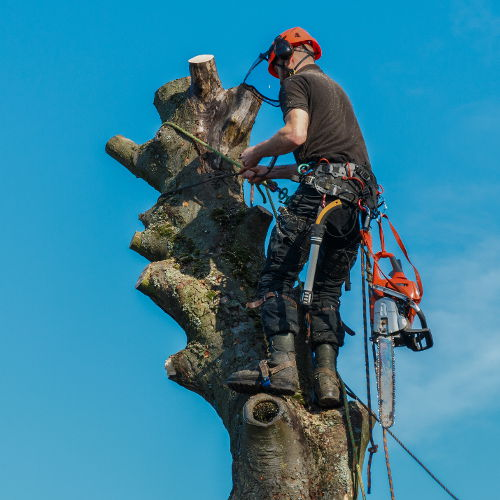 tree surgeon newcastle under lyme