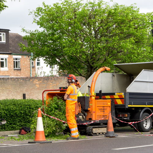 tree surgeon crewe